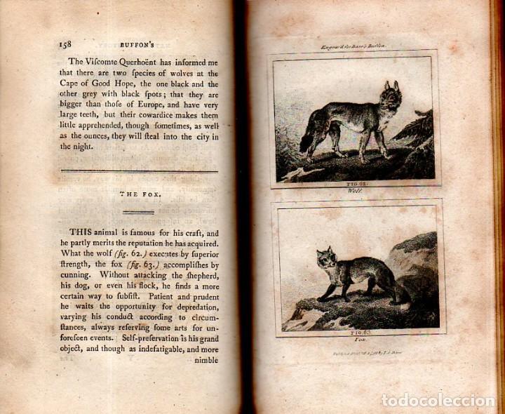 Libros antiguos: BUFFON´S NATURAL HIFTORY. BARR´S BUFFON. A THEORY OF THE EARTH A GENERAL HISTORY OF MAN.1797. VOL VI - Foto 11 - 158026886