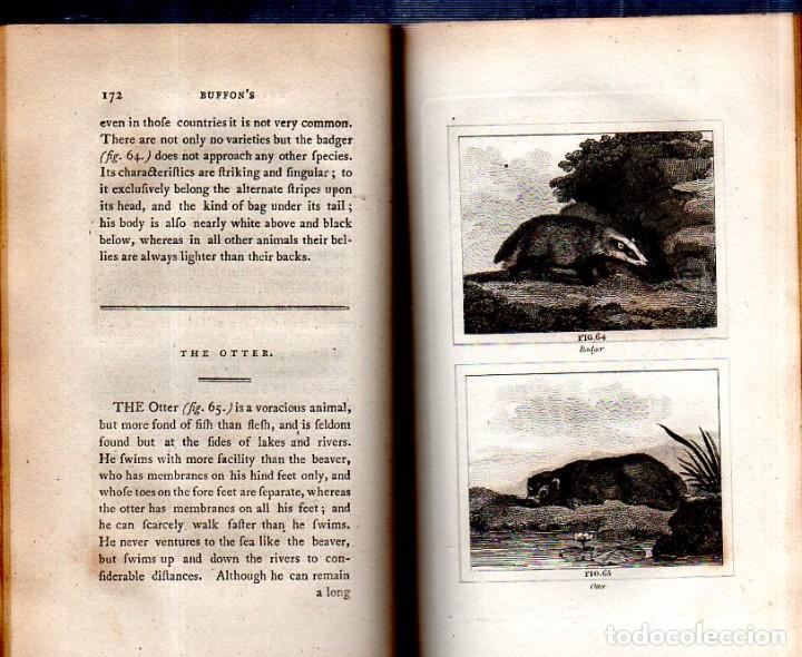 Libros antiguos: BUFFON´S NATURAL HIFTORY. BARR´S BUFFON. A THEORY OF THE EARTH A GENERAL HISTORY OF MAN.1797. VOL VI - Foto 12 - 158026886