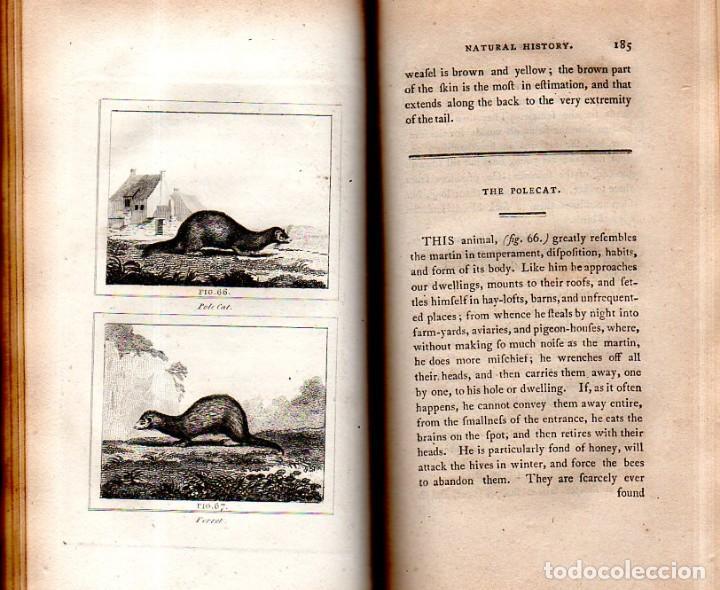 Libros antiguos: BUFFON´S NATURAL HIFTORY. BARR´S BUFFON. A THEORY OF THE EARTH A GENERAL HISTORY OF MAN.1797. VOL VI - Foto 13 - 158026886