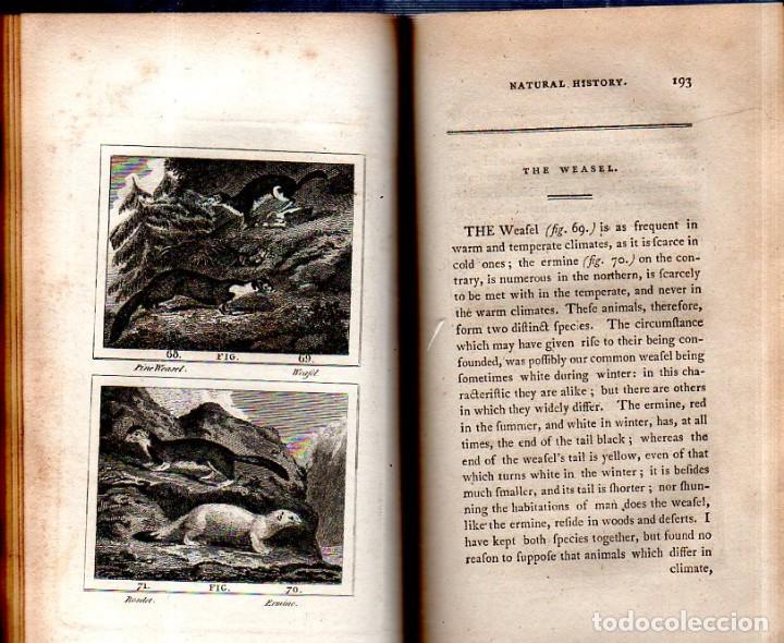 Libros antiguos: BUFFON´S NATURAL HIFTORY. BARR´S BUFFON. A THEORY OF THE EARTH A GENERAL HISTORY OF MAN.1797. VOL VI - Foto 14 - 158026886