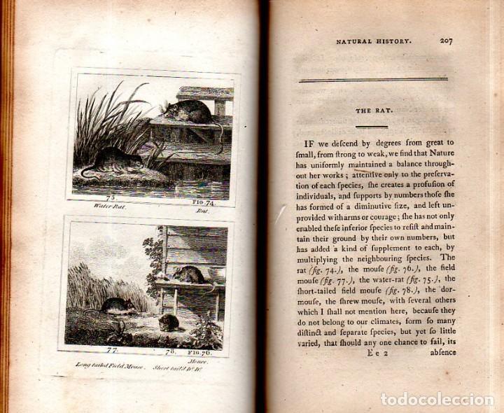 Libros antiguos: BUFFON´S NATURAL HIFTORY. BARR´S BUFFON. A THEORY OF THE EARTH A GENERAL HISTORY OF MAN.1797. VOL VI - Foto 15 - 158026886