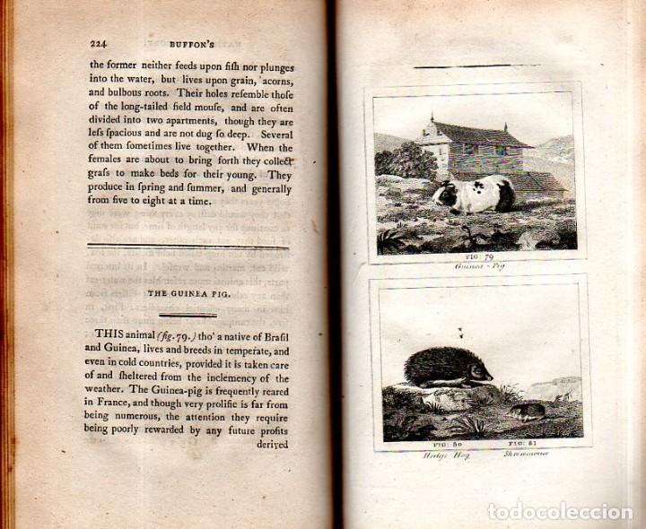 Libros antiguos: BUFFON´S NATURAL HIFTORY. BARR´S BUFFON. A THEORY OF THE EARTH A GENERAL HISTORY OF MAN.1797. VOL VI - Foto 16 - 158026886