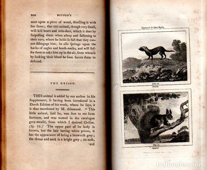 Libros antiguos: BUFFON´S NATURAL HIFTORY. BARR´S BUFFON. A THEORY OF THE EARTH A GENERAL HISTORY OF MAN.1797. VOL VI - Foto 17 - 158026886