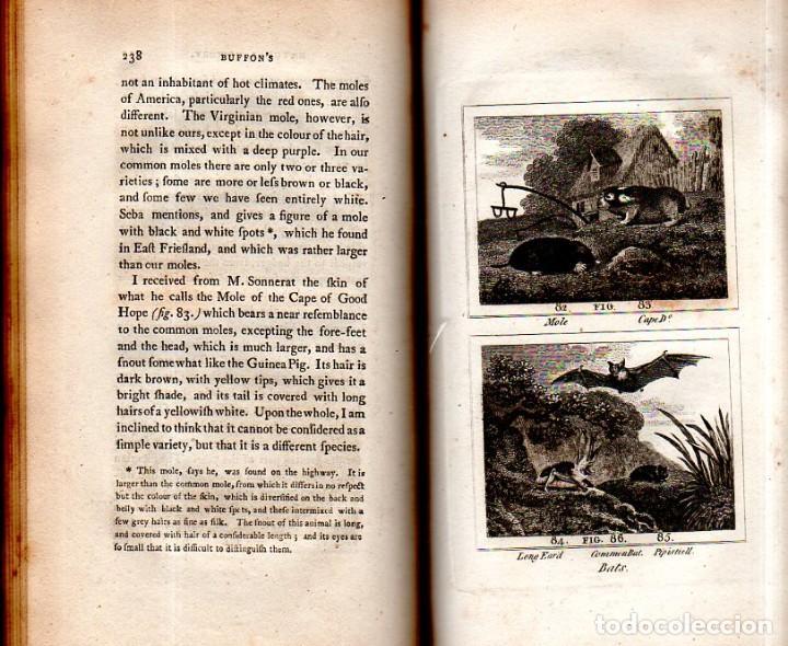 Libros antiguos: BUFFON´S NATURAL HIFTORY. BARR´S BUFFON. A THEORY OF THE EARTH A GENERAL HISTORY OF MAN.1797. VOL VI - Foto 18 - 158026886