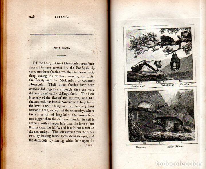 Libros antiguos: BUFFON´S NATURAL HIFTORY. BARR´S BUFFON. A THEORY OF THE EARTH A GENERAL HISTORY OF MAN.1797. VOL VI - Foto 19 - 158026886