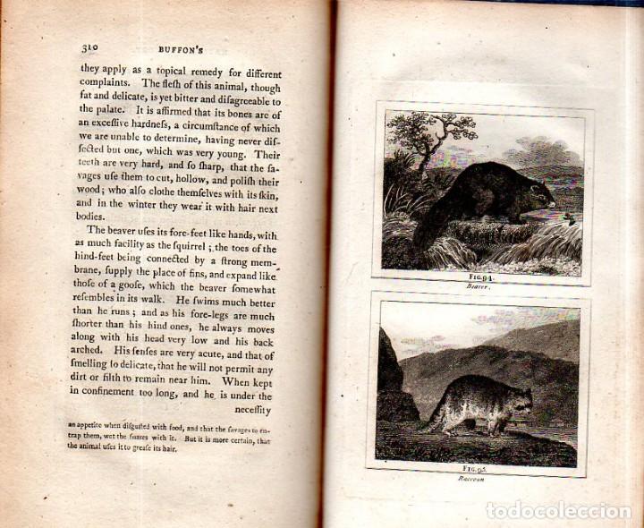 Libros antiguos: BUFFON´S NATURAL HIFTORY. BARR´S BUFFON. A THEORY OF THE EARTH A GENERAL HISTORY OF MAN.1797. VOL VI - Foto 21 - 158026886