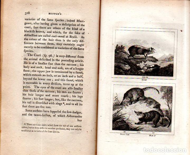 Libros antiguos: BUFFON´S NATURAL HIFTORY. BARR´S BUFFON. A THEORY OF THE EARTH A GENERAL HISTORY OF MAN.1797. VOL VI - Foto 22 - 158026886