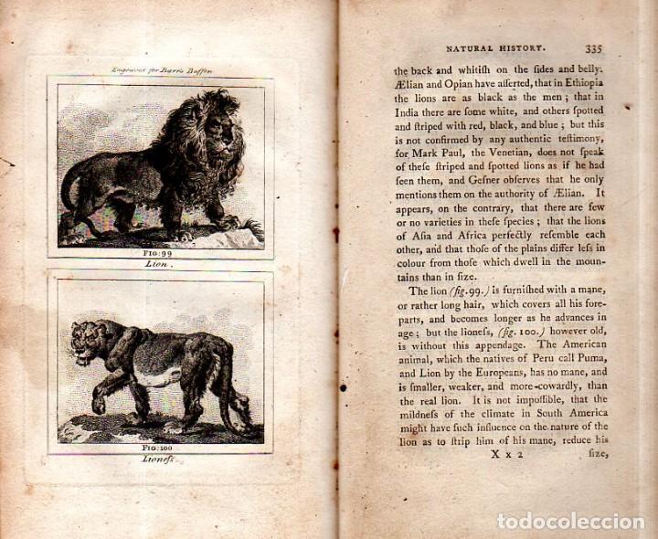 Libros antiguos: BUFFON´S NATURAL HIFTORY. BARR´S BUFFON. A THEORY OF THE EARTH A GENERAL HISTORY OF MAN.1797. VOL VI - Foto 23 - 158026886