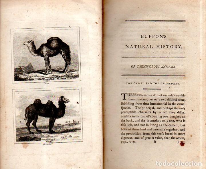 Libros antiguos: BUFFON´S NATURAL HIFTORY. BARR´S BUFFON.A THEORY OF THE EARTH A GENERAL HISTORY OF MAN.1797.VOL VIII - Foto 7 - 158033218