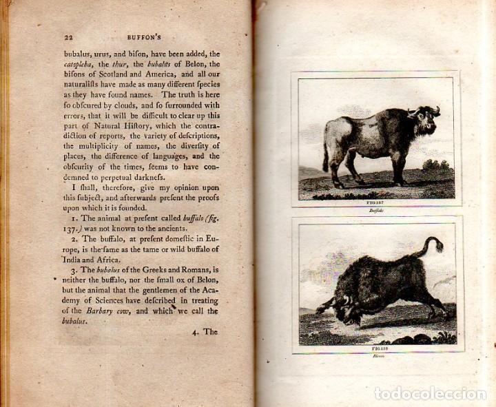 Libros antiguos: BUFFON´S NATURAL HIFTORY. BARR´S BUFFON.A THEORY OF THE EARTH A GENERAL HISTORY OF MAN.1797.VOL VIII - Foto 8 - 158033218