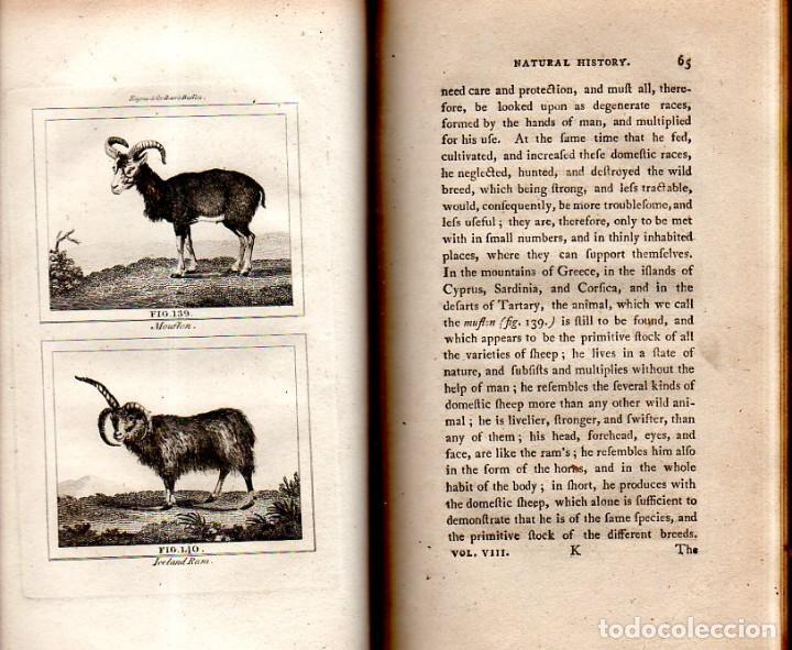 Libros antiguos: BUFFON´S NATURAL HIFTORY. BARR´S BUFFON.A THEORY OF THE EARTH A GENERAL HISTORY OF MAN.1797.VOL VIII - Foto 9 - 158033218
