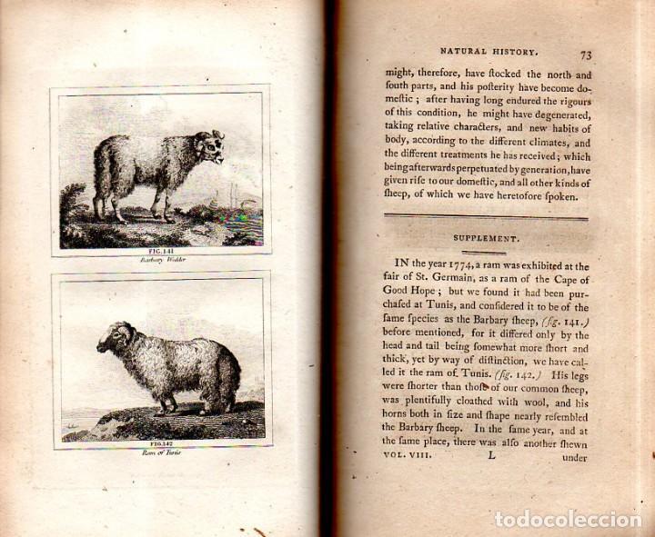 Libros antiguos: BUFFON´S NATURAL HIFTORY. BARR´S BUFFON.A THEORY OF THE EARTH A GENERAL HISTORY OF MAN.1797.VOL VIII - Foto 10 - 158033218
