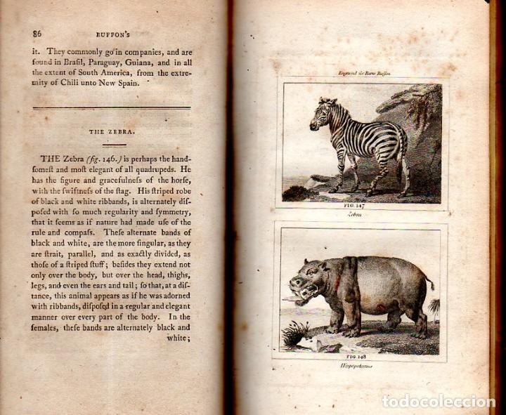 Libros antiguos: BUFFON´S NATURAL HIFTORY. BARR´S BUFFON.A THEORY OF THE EARTH A GENERAL HISTORY OF MAN.1797.VOL VIII - Foto 12 - 158033218