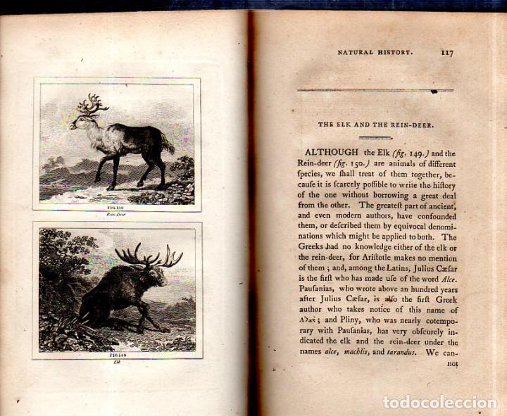Libros antiguos: BUFFON´S NATURAL HIFTORY. BARR´S BUFFON.A THEORY OF THE EARTH A GENERAL HISTORY OF MAN.1797.VOL VIII - Foto 13 - 158033218