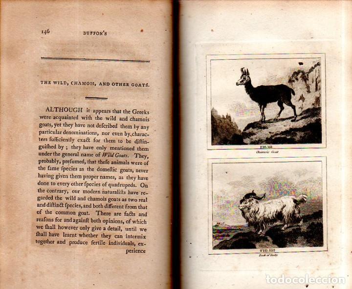 Libros antiguos: BUFFON´S NATURAL HIFTORY. BARR´S BUFFON.A THEORY OF THE EARTH A GENERAL HISTORY OF MAN.1797.VOL VIII - Foto 14 - 158033218