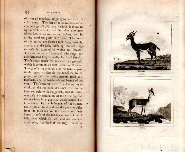 Libros antiguos: BUFFON´S NATURAL HIFTORY. BARR´S BUFFON.A THEORY OF THE EARTH A GENERAL HISTORY OF MAN.1797.VOL VIII - Foto 15 - 158033218