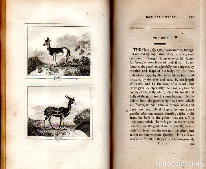Libros antiguos: BUFFON´S NATURAL HIFTORY. BARR´S BUFFON.A THEORY OF THE EARTH A GENERAL HISTORY OF MAN.1797.VOL VIII - Foto 16 - 158033218