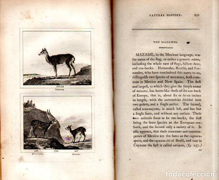 Libros antiguos: BUFFON´S NATURAL HIFTORY. BARR´S BUFFON.A THEORY OF THE EARTH A GENERAL HISTORY OF MAN.1797.VOL VIII - Foto 17 - 158033218