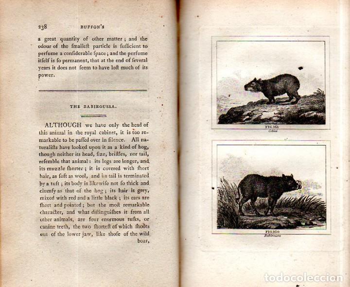 Libros antiguos: BUFFON´S NATURAL HIFTORY. BARR´S BUFFON.A THEORY OF THE EARTH A GENERAL HISTORY OF MAN.1797.VOL VIII - Foto 18 - 158033218