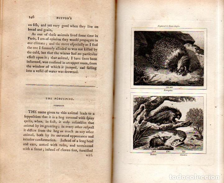 Libros antiguos: BUFFON´S NATURAL HIFTORY. BARR´S BUFFON.A THEORY OF THE EARTH A GENERAL HISTORY OF MAN.1797.VOL VIII - Foto 19 - 158033218