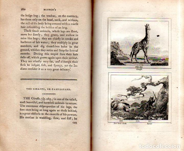 Libros antiguos: BUFFON´S NATURAL HIFTORY. BARR´S BUFFON.A THEORY OF THE EARTH A GENERAL HISTORY OF MAN.1797.VOL VIII - Foto 20 - 158033218