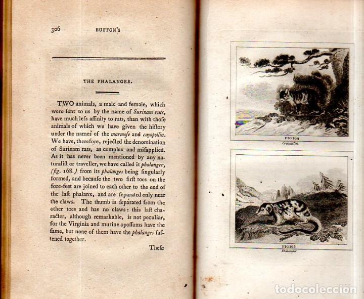 Libros antiguos: BUFFON´S NATURAL HIFTORY. BARR´S BUFFON.A THEORY OF THE EARTH A GENERAL HISTORY OF MAN.1797.VOL VIII - Foto 21 - 158033218