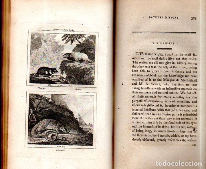 Libros antiguos: BUFFON´S NATURAL HIFTORY. BARR´S BUFFON.A THEORY OF THE EARTH A GENERAL HISTORY OF MAN.1797.VOL VIII - Foto 22 - 158033218