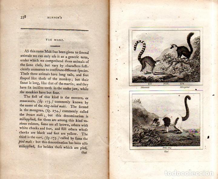 Libros antiguos: BUFFON´S NATURAL HIFTORY. BARR´S BUFFON.A THEORY OF THE EARTH A GENERAL HISTORY OF MAN.1797.VOL VIII - Foto 23 - 158033218