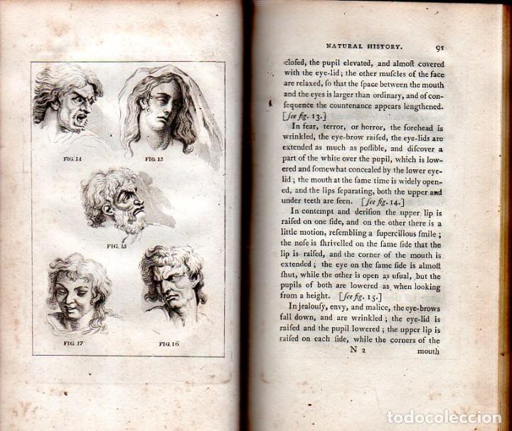 Libros antiguos: BUFFON´S NATURAL HIFTORY. BARR´S BUFFON. A THEORY OF THE EARTH A GENERAL HISTORY OF MAN.1797. VOL IV - Foto 6 - 158039442
