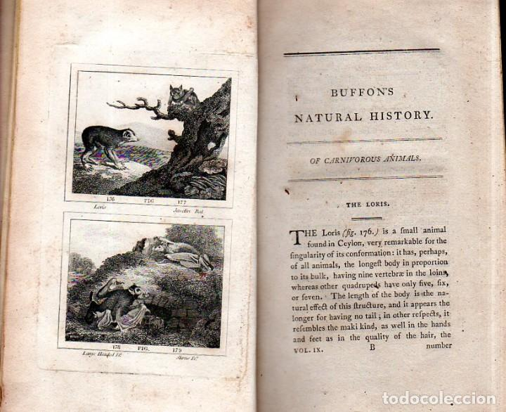Libros antiguos: BUFFON´S NATURAL HIFTORY. BARR´S BUFFON. A THEORY OF THE EARTH A GENERAL HISTORY OF MAN.1797. VOL IX - Foto 8 - 158063206
