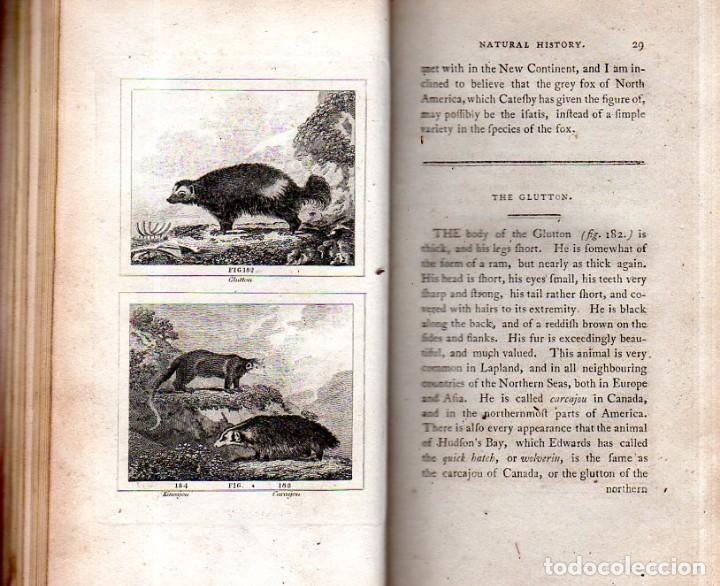 Libros antiguos: BUFFON´S NATURAL HIFTORY. BARR´S BUFFON. A THEORY OF THE EARTH A GENERAL HISTORY OF MAN.1797. VOL IX - Foto 10 - 158063206