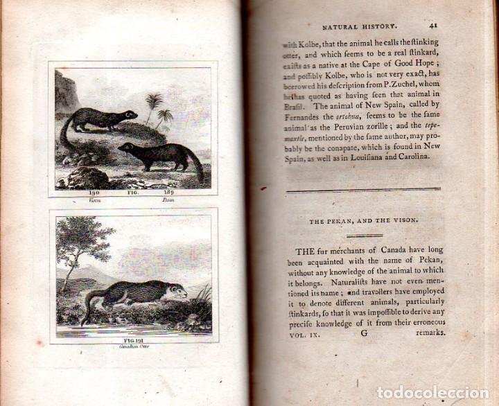 Libros antiguos: BUFFON´S NATURAL HIFTORY. BARR´S BUFFON. A THEORY OF THE EARTH A GENERAL HISTORY OF MAN.1797. VOL IX - Foto 12 - 158063206