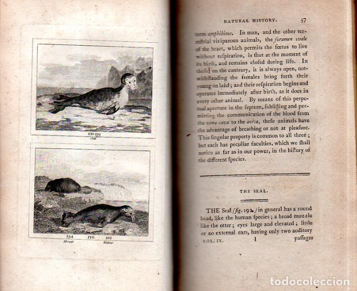 Libros antiguos: BUFFON´S NATURAL HIFTORY. BARR´S BUFFON. A THEORY OF THE EARTH A GENERAL HISTORY OF MAN.1797. VOL IX - Foto 13 - 158063206