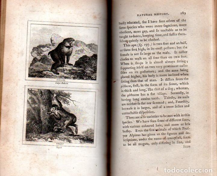 Libros antiguos: BUFFON´S NATURAL HIFTORY. BARR´S BUFFON. A THEORY OF THE EARTH A GENERAL HISTORY OF MAN.1797. VOL IX - Foto 15 - 158063206