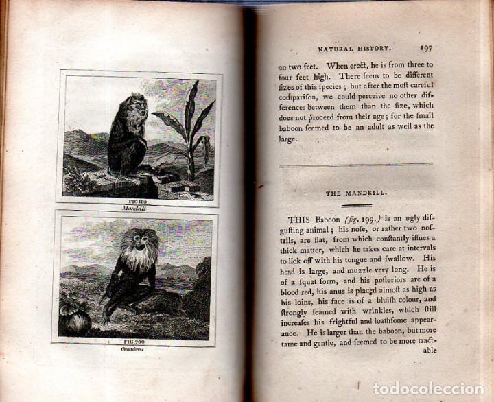 Libros antiguos: BUFFON´S NATURAL HIFTORY. BARR´S BUFFON. A THEORY OF THE EARTH A GENERAL HISTORY OF MAN.1797. VOL IX - Foto 16 - 158063206