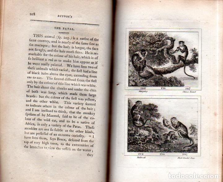 Libros antiguos: BUFFON´S NATURAL HIFTORY. BARR´S BUFFON. A THEORY OF THE EARTH A GENERAL HISTORY OF MAN.1797. VOL IX - Foto 18 - 158063206