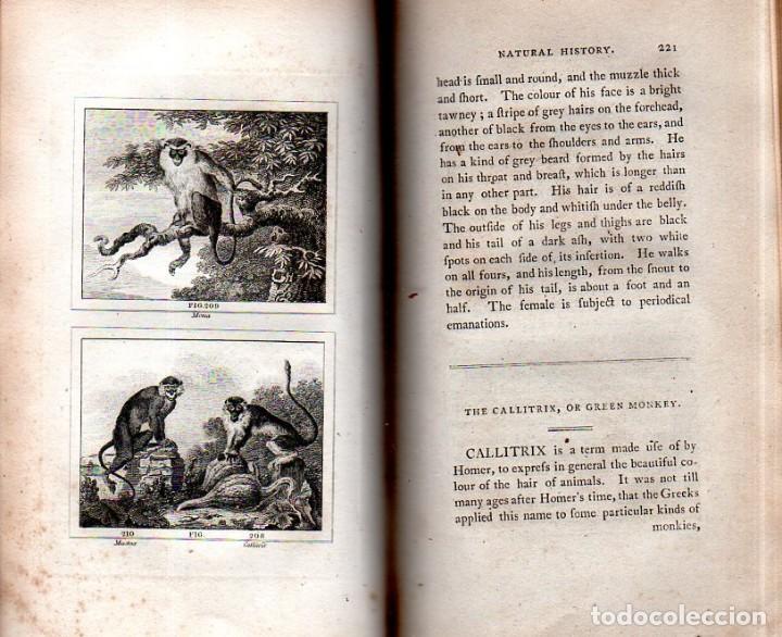 Libros antiguos: BUFFON´S NATURAL HIFTORY. BARR´S BUFFON. A THEORY OF THE EARTH A GENERAL HISTORY OF MAN.1797. VOL IX - Foto 19 - 158063206