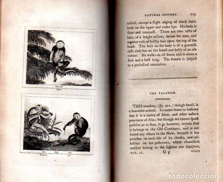 Libros antiguos: BUFFON´S NATURAL HIFTORY. BARR´S BUFFON. A THEORY OF THE EARTH A GENERAL HISTORY OF MAN.1797. VOL IX - Foto 20 - 158063206