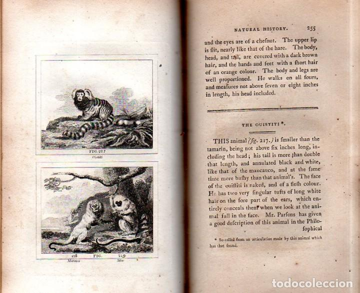 Libros antiguos: BUFFON´S NATURAL HIFTORY. BARR´S BUFFON. A THEORY OF THE EARTH A GENERAL HISTORY OF MAN.1797. VOL IX - Foto 22 - 158063206