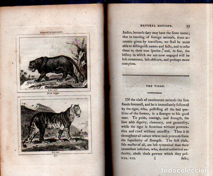 Libros antiguos: BUFFON´S NATURAL HIFTORY. BARR´S BUFFON.A THEORY OF THE EARTH A GENERAL HISTORY OF MAN.1797. VOL VII - Foto 7 - 158200998