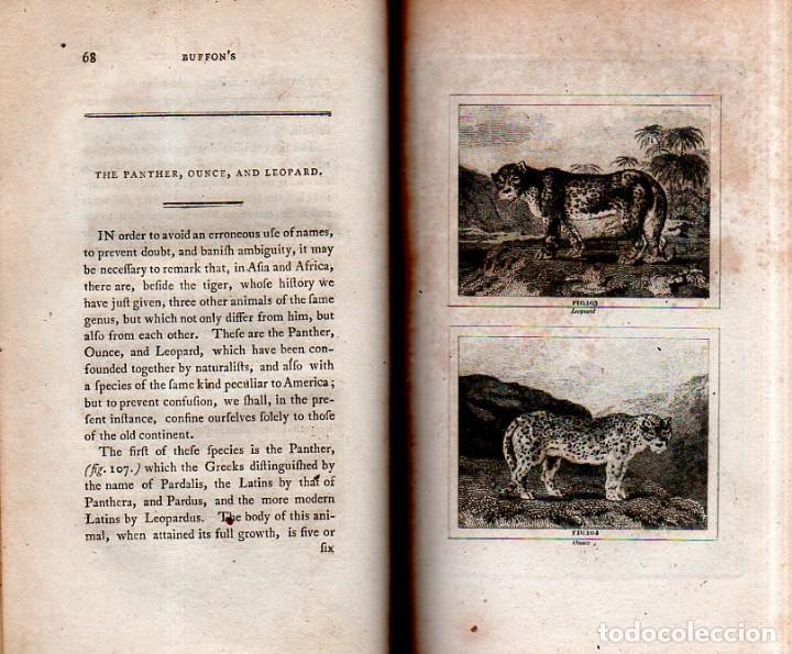 Libros antiguos: BUFFON´S NATURAL HIFTORY. BARR´S BUFFON.A THEORY OF THE EARTH A GENERAL HISTORY OF MAN.1797. VOL VII - Foto 8 - 158200998