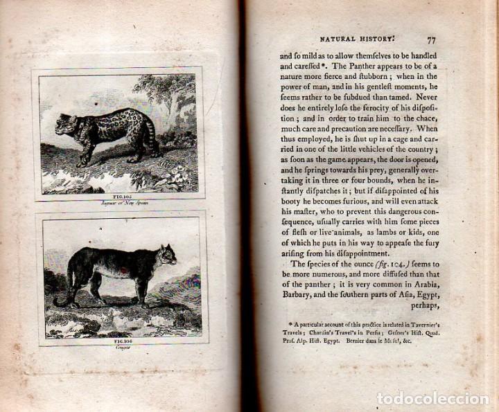 Libros antiguos: BUFFON´S NATURAL HIFTORY. BARR´S BUFFON.A THEORY OF THE EARTH A GENERAL HISTORY OF MAN.1797. VOL VII - Foto 9 - 158200998
