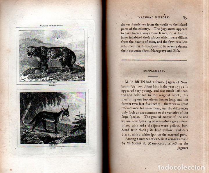 Libros antiguos: BUFFON´S NATURAL HIFTORY. BARR´S BUFFON.A THEORY OF THE EARTH A GENERAL HISTORY OF MAN.1797. VOL VII - Foto 10 - 158200998