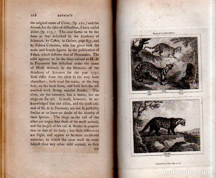 Libros antiguos: BUFFON´S NATURAL HIFTORY. BARR´S BUFFON.A THEORY OF THE EARTH A GENERAL HISTORY OF MAN.1797. VOL VII - Foto 12 - 158200998