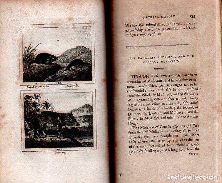Libros antiguos: BUFFON´S NATURAL HIFTORY. BARR´S BUFFON.A THEORY OF THE EARTH A GENERAL HISTORY OF MAN.1797. VOL VII - Foto 13 - 158200998