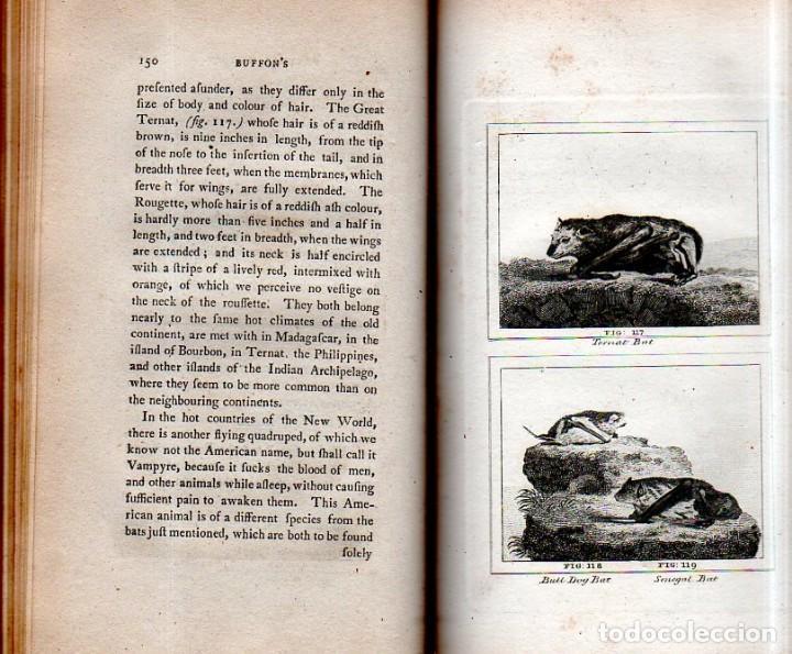Libros antiguos: BUFFON´S NATURAL HIFTORY. BARR´S BUFFON.A THEORY OF THE EARTH A GENERAL HISTORY OF MAN.1797. VOL VII - Foto 14 - 158200998