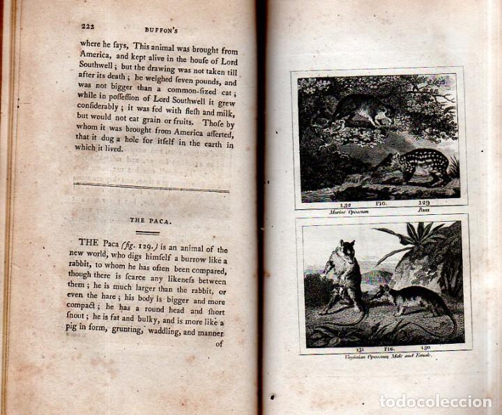 Libros antiguos: BUFFON´S NATURAL HIFTORY. BARR´S BUFFON.A THEORY OF THE EARTH A GENERAL HISTORY OF MAN.1797. VOL VII - Foto 18 - 158200998