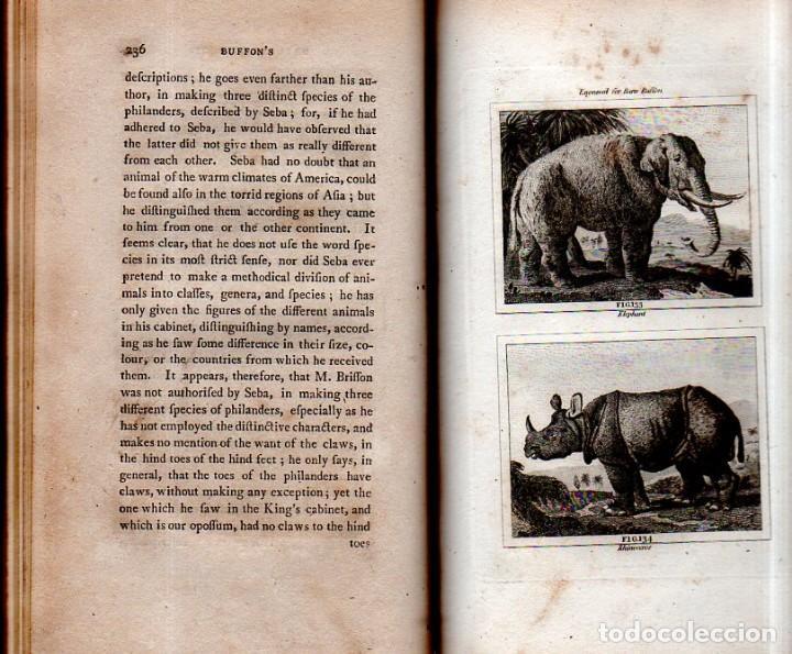 Libros antiguos: BUFFON´S NATURAL HIFTORY. BARR´S BUFFON.A THEORY OF THE EARTH A GENERAL HISTORY OF MAN.1797. VOL VII - Foto 19 - 158200998