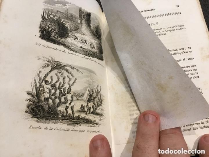 Libros antiguos: Libro naturalista del año 1863 en frances Les Jeunes Naturalistes - Foto 4 - 173469554