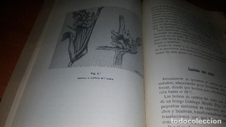 Libros antiguos: Memoria, trabajos de extincion de plagad del campo, est. Daños por pedrisco.. zaragoza 1921 - Foto 4 - 173567324